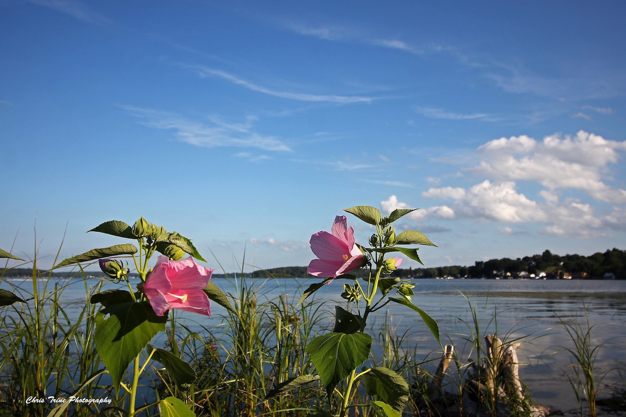 Beautiful summer day (photo)